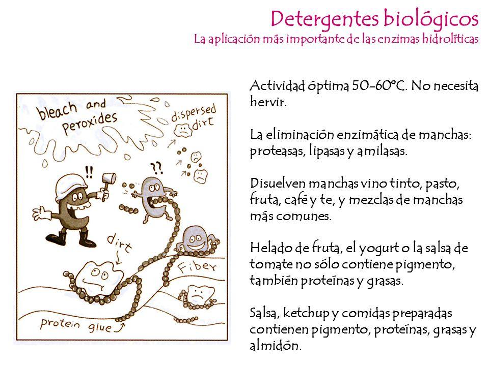 Detergentes biológicos La aplicación más importante de las enzimas hidrolíticas Disuelven manchas vino tinto, pasto, fruta, café y te, y mezclas de ma