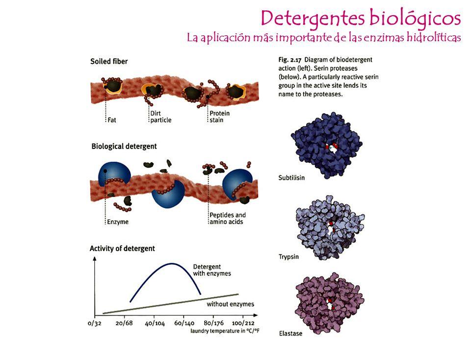 Detergentes biológicos La aplicación más importante de las enzimas hidrolíticas