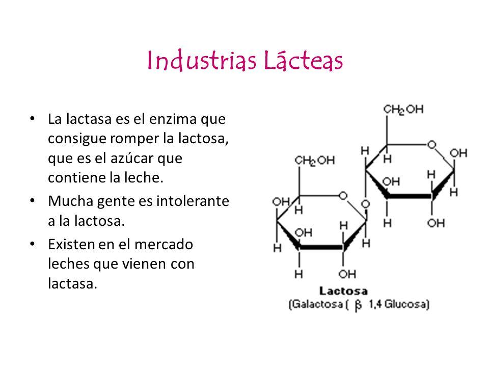 Industrias Lácteas La lactasa es el enzima que consigue romper la lactosa, que es el azúcar que contiene la leche. Mucha gente es intolerante a la lac