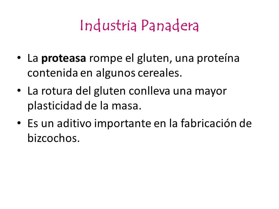 Industria Panadera La proteasa rompe el gluten, una proteína contenida en algunos cereales. La rotura del gluten conlleva una mayor plasticidad de la