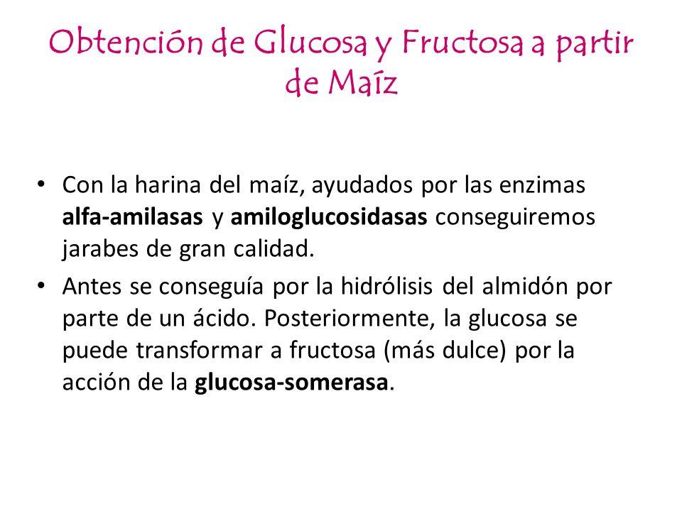 Obtención de Glucosa y Fructosa a partir de Maíz Con la harina del maíz, ayudados por las enzimas alfa-amilasas y amiloglucosidasas conseguiremos jara