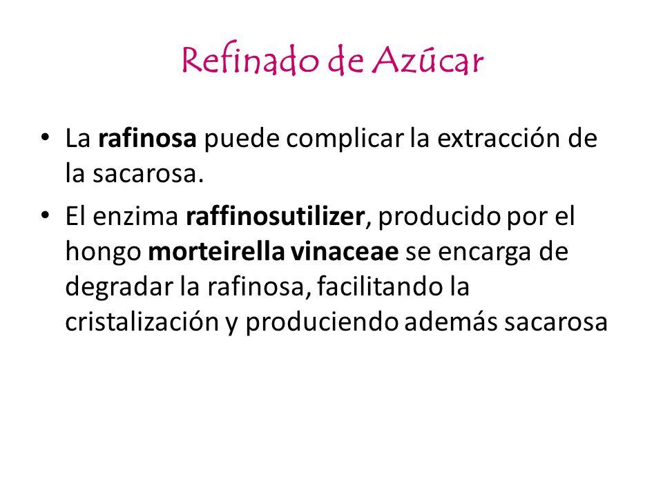 Refinado de Azúcar La rafinosa puede complicar la extracción de la sacarosa. El enzima raffinosutilizer, producido por el hongo morteirella vinaceae s