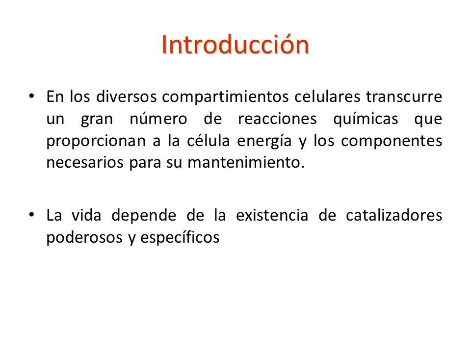 Concepto Son catalizadores biológicos, la mayor parte de las veces de naturaleza proteica.
