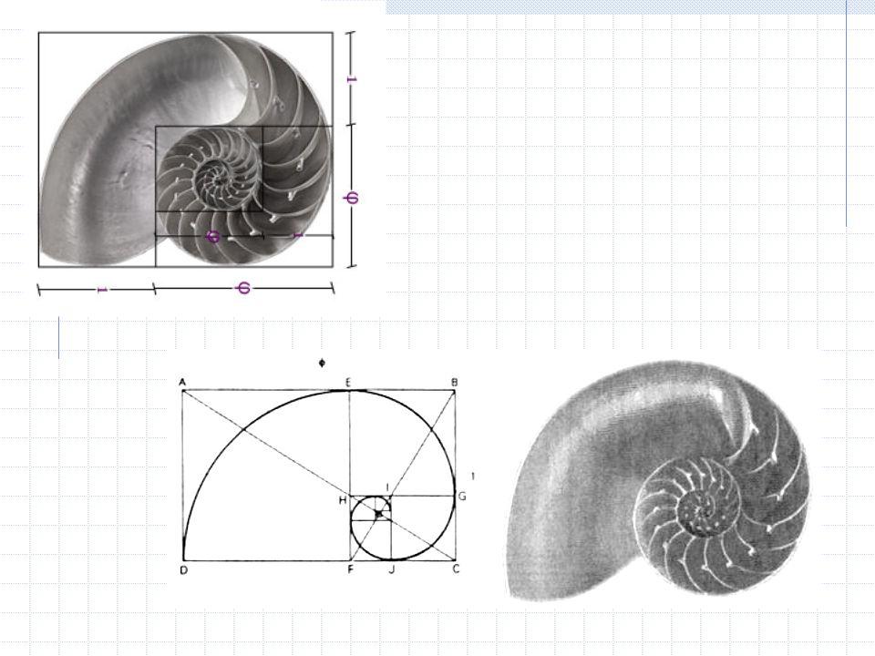 Ternario y otros rectángulos Es una figura de 2x3.