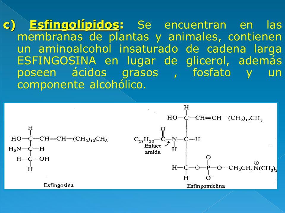 c) Esfingolípidos: c) Esfingolípidos: Se encuentran en las membranas de plantas y animales, contienen un aminoalcohol insaturado de cadena larga ESFIN