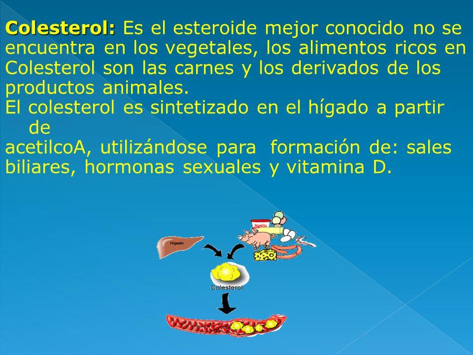 Colesterol: Colesterol: Es el esteroide mejor conocido no se encuentra en los vegetales, los alimentos ricos en Colesterol son las carnes y los deriva