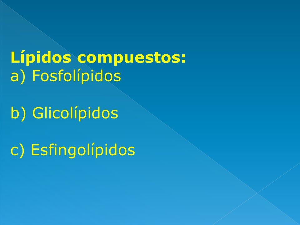 Lípidos compuestos: a) Fosfolípidos b) Glicolípidos c) Esfingolípidos