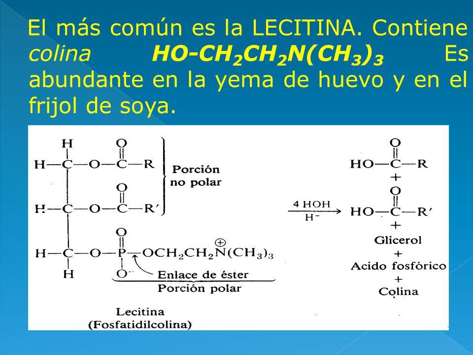 El más común es la LECITINA. Contiene colina HO-CH 2 CH 2 N(CH 3 ) 3 Es abundante en la yema de huevo y en el frijol de soya.