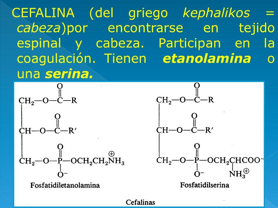 CEFALINA (del griego kephalikos = cabeza)por encontrarse en tejido espinal y cabeza. Participan en la coagulación. Tienen etanolamina o una serina.