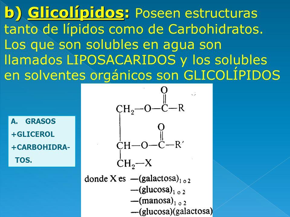 b) Glicolípidos: b) Glicolípidos: Poseen estructuras tanto de lípidos como de Carbohidratos. Los que son solubles en agua son llamados LIPOSACARIDOS y