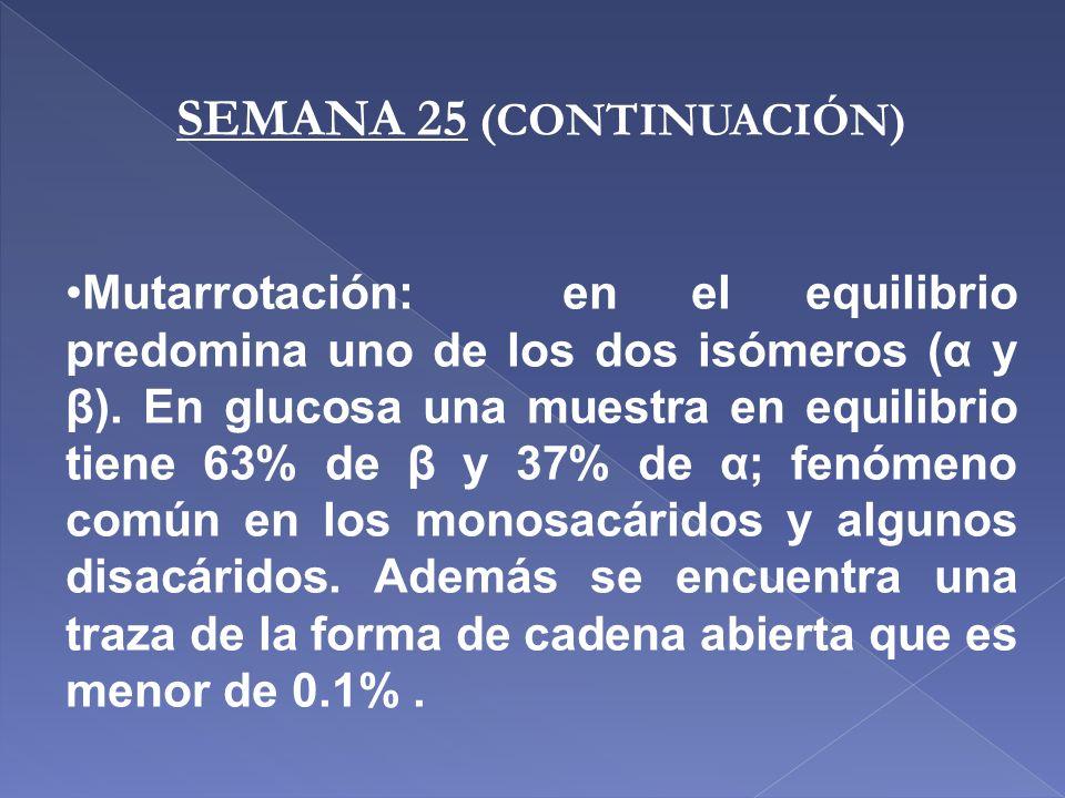 SEMANA 25 (CONTINUACIÓN) Mutarrotación: en el equilibrio predomina uno de los dos isómeros (α y β). En glucosa una muestra en equilibrio tiene 63% de
