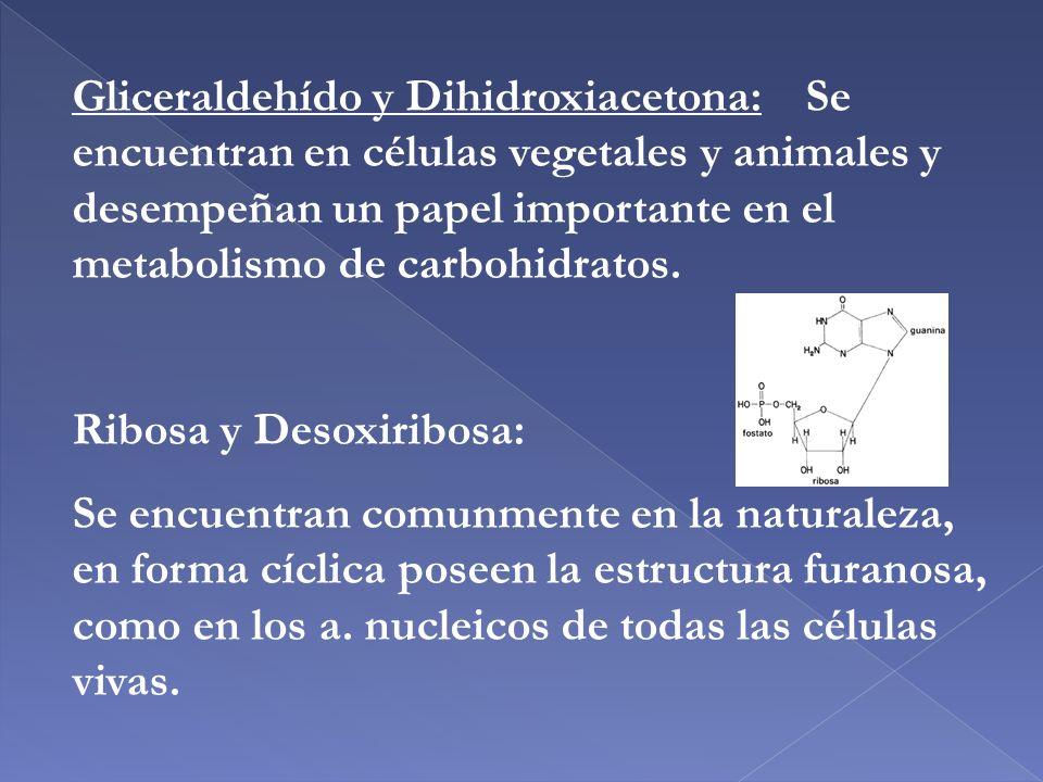 Gliceraldehído y Dihidroxiacetona: Se encuentran en células vegetales y animales y desempeñan un papel importante en el metabolismo de carbohidratos.
