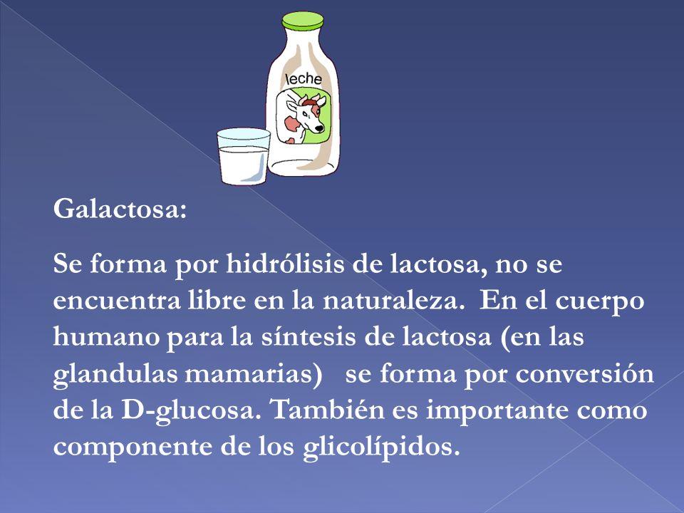 Galactosa: Se forma por hidrólisis de lactosa, no se encuentra libre en la naturaleza. En el cuerpo humano para la síntesis de lactosa (en las glandul
