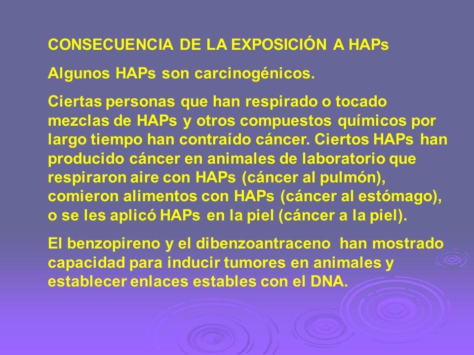 CONSECUENCIA DE LA EXPOSICIÓN A HAPs Algunos HAPs son carcinogénicos. Ciertas personas que han respirado o tocado mezclas de HAPs y otros compuestos q