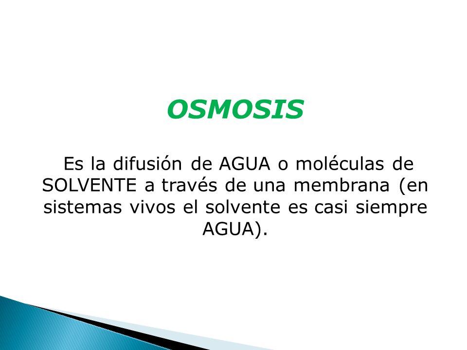 OSMOSIS Es la difusión de AGUA o moléculas de SOLVENTE a través de una membrana (en sistemas vivos el solvente es casi siempre AGUA).