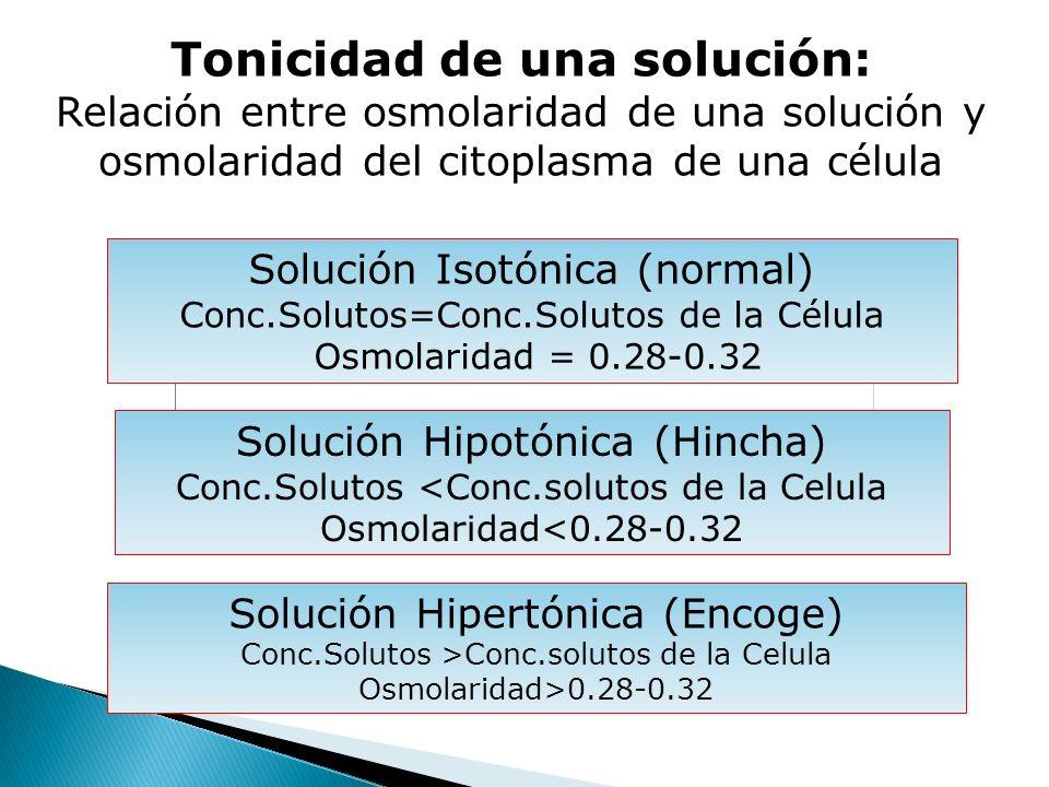 Tonicidad de una solución: Relación entre osmolaridad de una solución y osmolaridad del citoplasma de una célula Solución Isotónica (normal) Conc.Solu