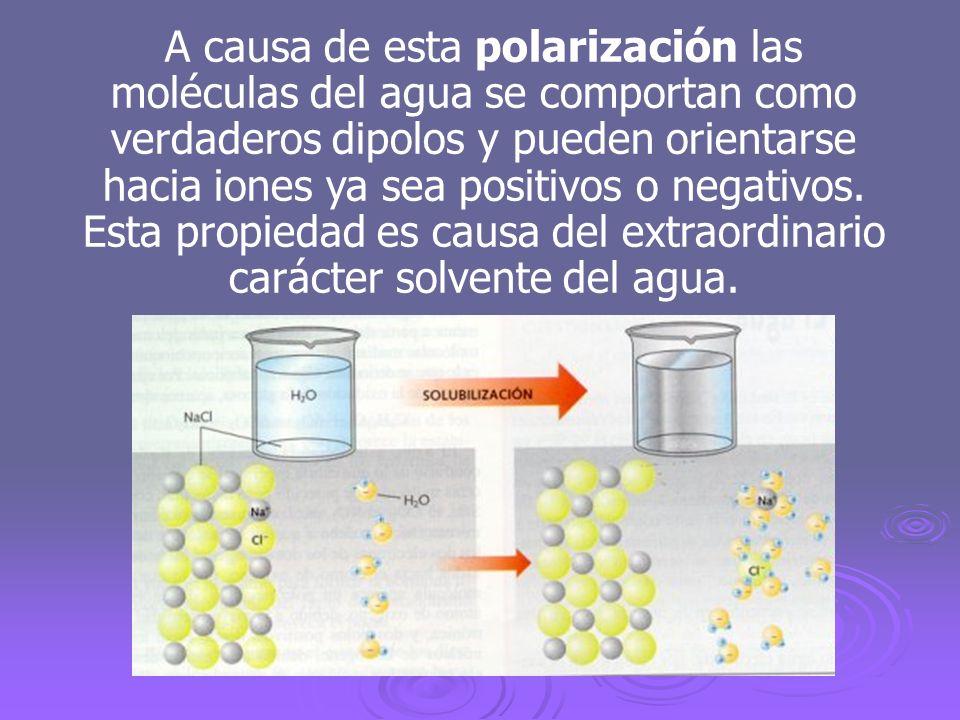 A causa de esta polarización las moléculas del agua se comportan como verdaderos dipolos y pueden orientarse hacia iones ya sea positivos o negativos.