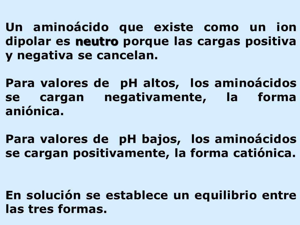 neutro Un aminoácido que existe como un ion dipolar es neutro porque las cargas positiva y negativa se cancelan. Para valores de pH altos, los aminoác
