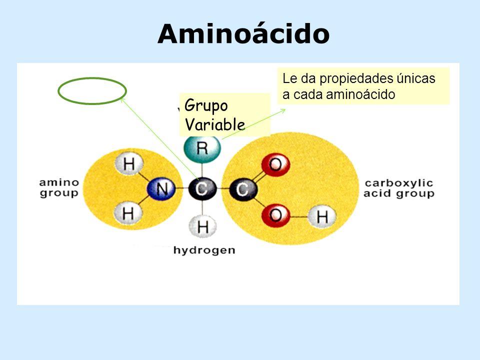 Grupo Variable Aminoácido Le da propiedades únicas a cada aminoácido