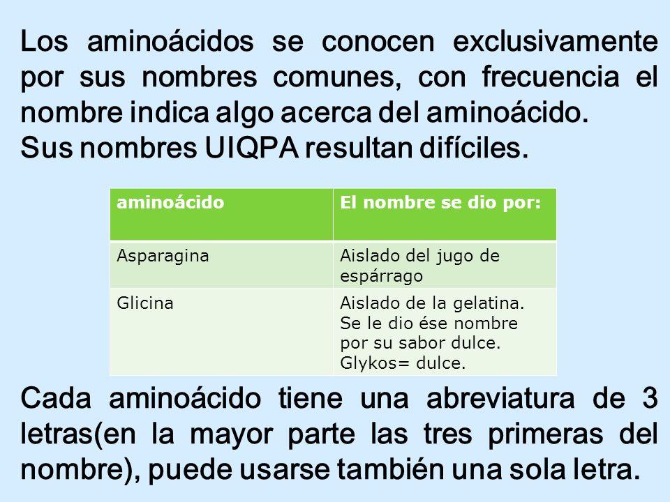 Los aminoácidos se conocen exclusivamente por sus nombres comunes, con frecuencia el nombre indica algo acerca del aminoácido. Sus nombres UIQPA resul