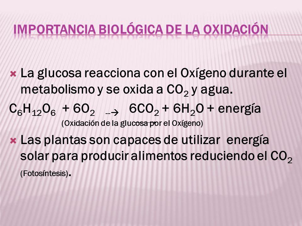 La glucosa reacciona con el Oxígeno durante el metabolismo y se oxida a CO 2 y agua. C 6 H 12 O 6 + 6O 2 -- 6CO 2 + 6H 2 O + energía (Oxidación de la