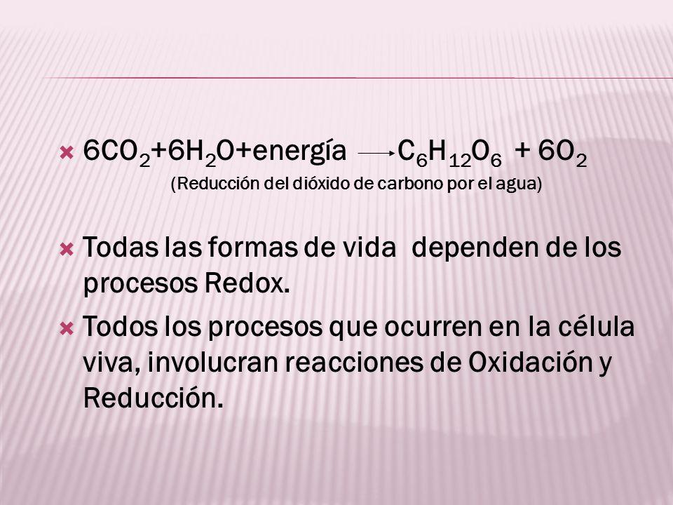 6CO 2 +6H 2 O+energía C 6 H 12 O 6 + 6O 2 (Reducción del dióxido de carbono por el agua) Todas las formas de vida dependen de los procesos Redox. Todo