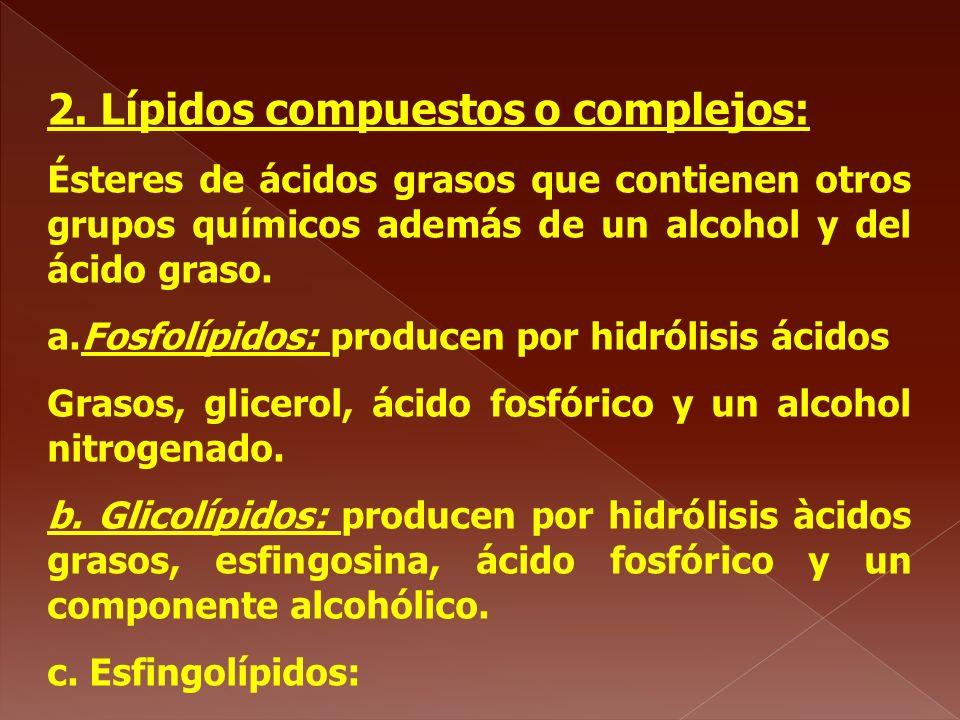 2. Lípidos compuestos o complejos: Ésteres de ácidos grasos que contienen otros grupos químicos además de un alcohol y del ácido graso. a.Fosfolípidos