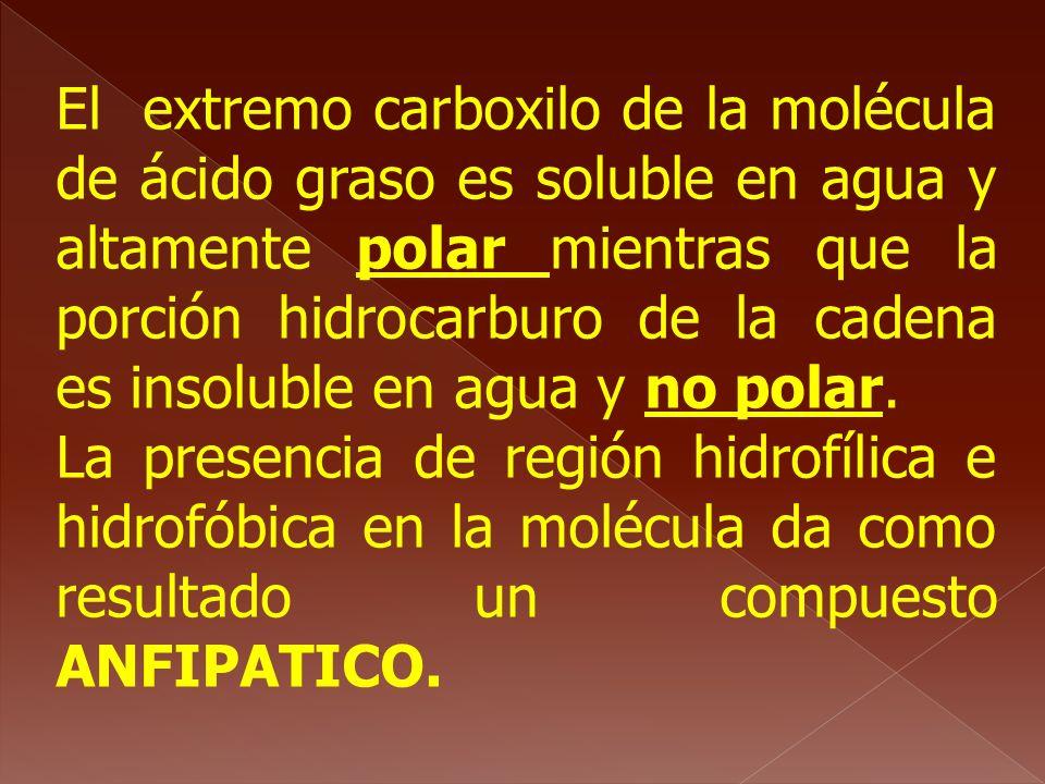El extremo carboxilo de la molécula de ácido graso es soluble en agua y altamente polar mientras que la porción hidrocarburo de la cadena es insoluble