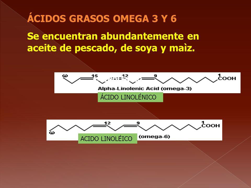 ÁCIDOS GRASOS OMEGA 3 Y 6 Se encuentran abundantemente en aceite de pescado, de soya y maìz. A. LINOLÈNICO ÁCIDO LINOLÉNICO ACIDO LINOLÉICO
