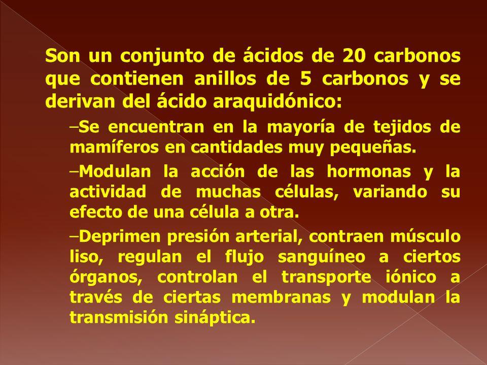 Son un conjunto de ácidos de 20 carbonos que contienen anillos de 5 carbonos y se derivan del ácido araquidónico: –Se encuentran en la mayoría de teji