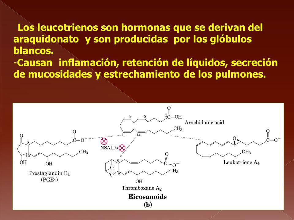 -Los leucotrienos son hormonas que se derivan del araquidonato y son producidas por los glóbulos blancos. -Causan inflamación, retención de líquidos,