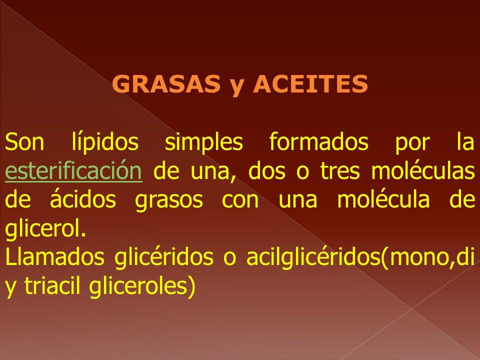GRASAS y ACEITES Son lípidos simples formados por la esterificación de una, dos o tres moléculas de ácidos grasos con una molécula de glicerol. esteri