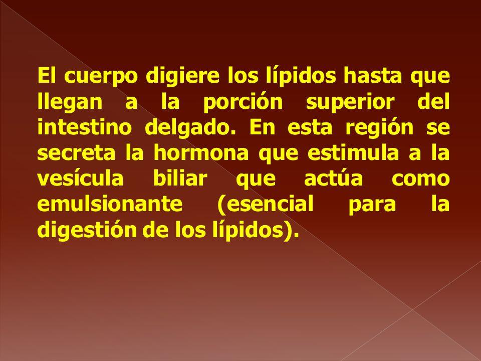 El cuerpo digiere los lípidos hasta que llegan a la porción superior del intestino delgado. En esta región se secreta la hormona que estimula a la ves