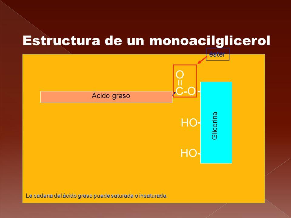 Estructura de un monoacilglicerol CH 2 CH CH 2 C-O = O HO Glicerina Ácido graso éster HO La cadena del ácido graso puede saturada o insaturada.