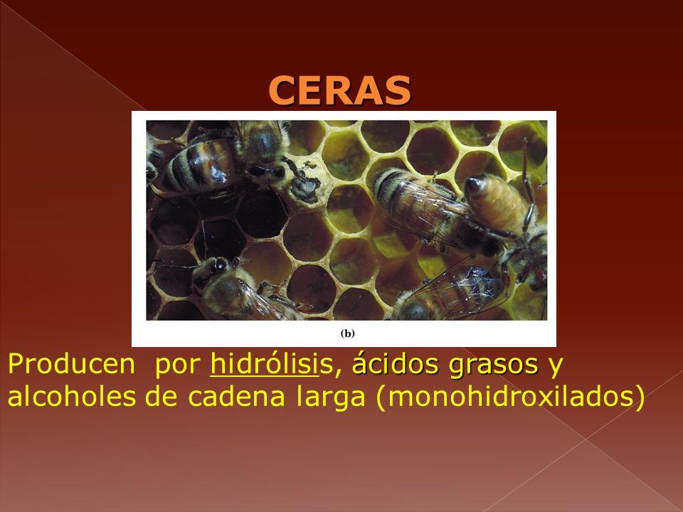 CERAS ácidos grasos Producen por hidrólisis, ácidos grasos y alcoholes de cadena larga (monohidroxilados)