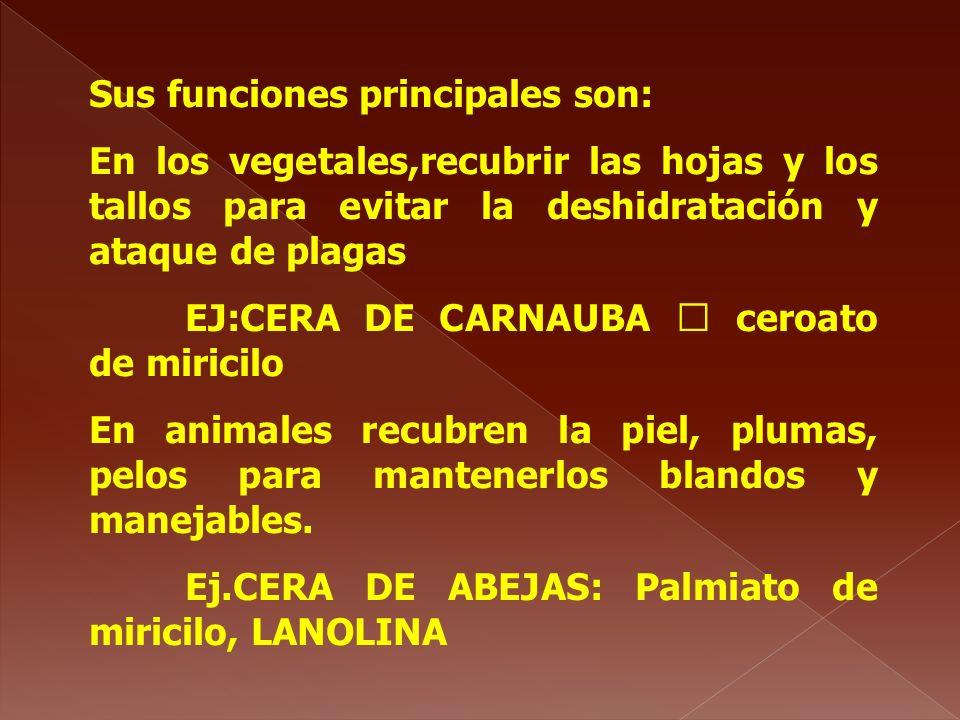 Sus funciones principales son: En los vegetales,recubrir las hojas y los tallos para evitar la deshidratación y ataque de plagas EJ:CERA DE CARNAUBA c