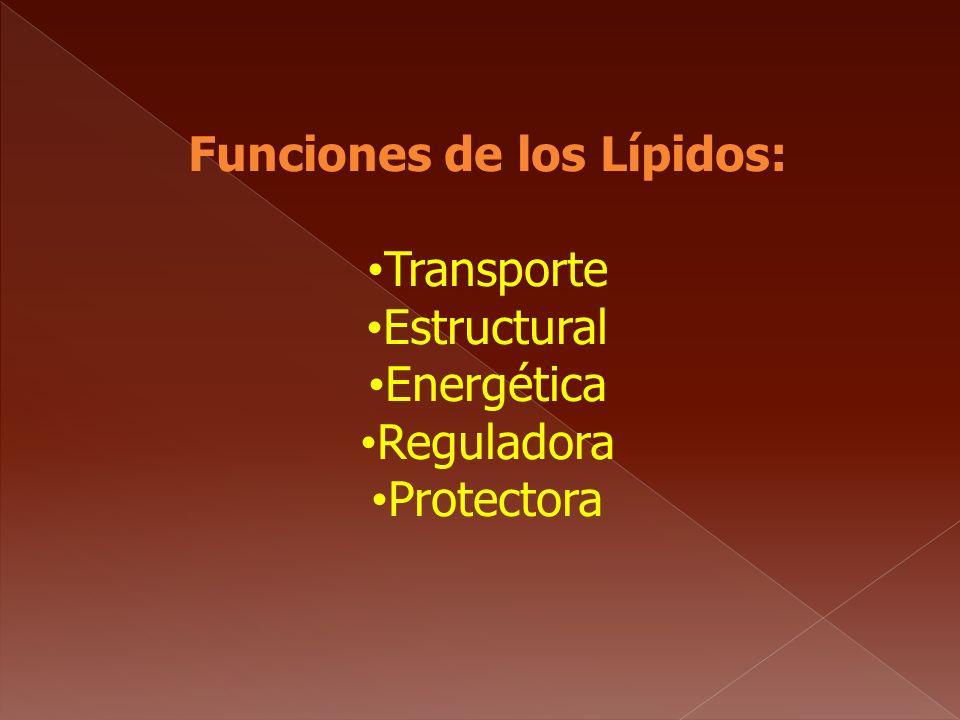 Funciones de los Lípidos: Transporte Estructural Energética Reguladora Protectora