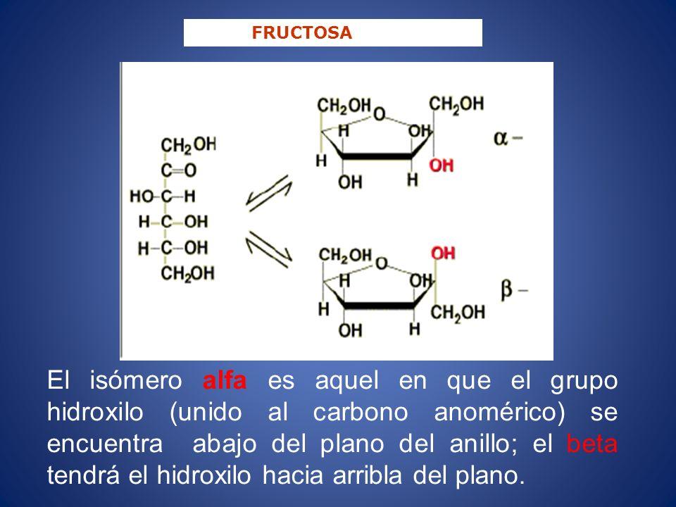 FRUCTOSA El isómero alfa es aquel en que el grupo hidroxilo (unido al carbono anomérico) se encuentra abajo del plano del anillo; el beta tendrá el hi