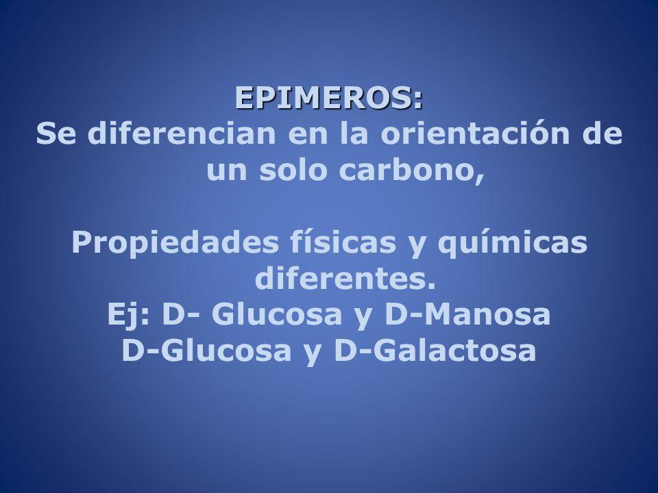 EPIMEROS: Se diferencian en la orientación de un solo carbono, Propiedades físicas y químicas diferentes. Ej: D- Glucosa y D-Manosa D-Glucosa y D-Gala