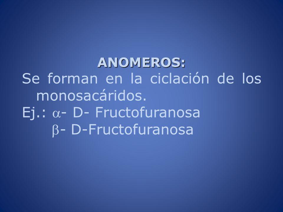 ANOMEROS: Se forman en la ciclación de los monosacáridos. Ej.: - D- Fructofuranosa - D-Fructofuranosa