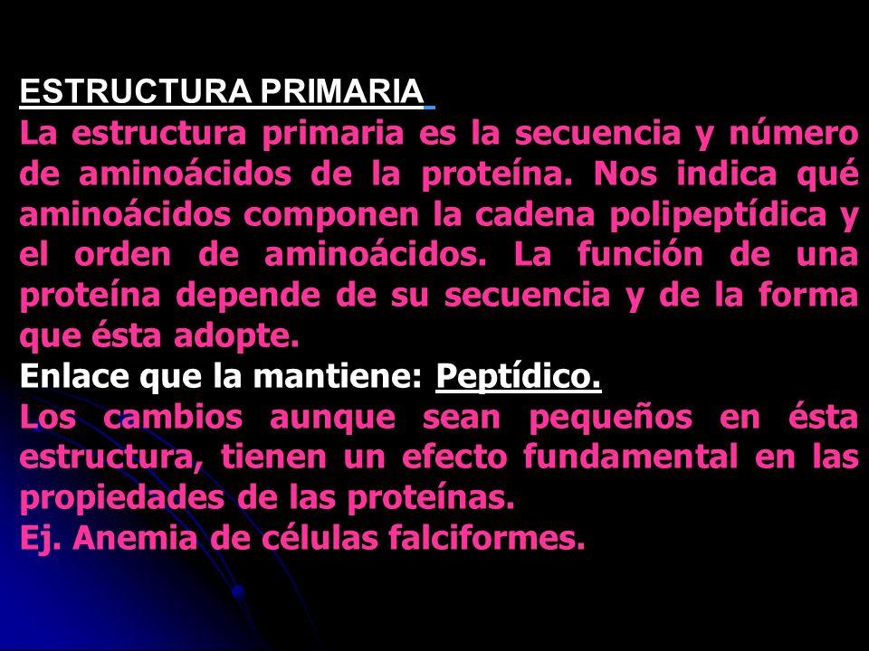 ESTRUCTURA PRIMARIA ESTRUCTURA PRIMARIA La estructura primaria es la secuencia y número de aminoácidos de la proteína. Nos indica qué aminoácidos comp