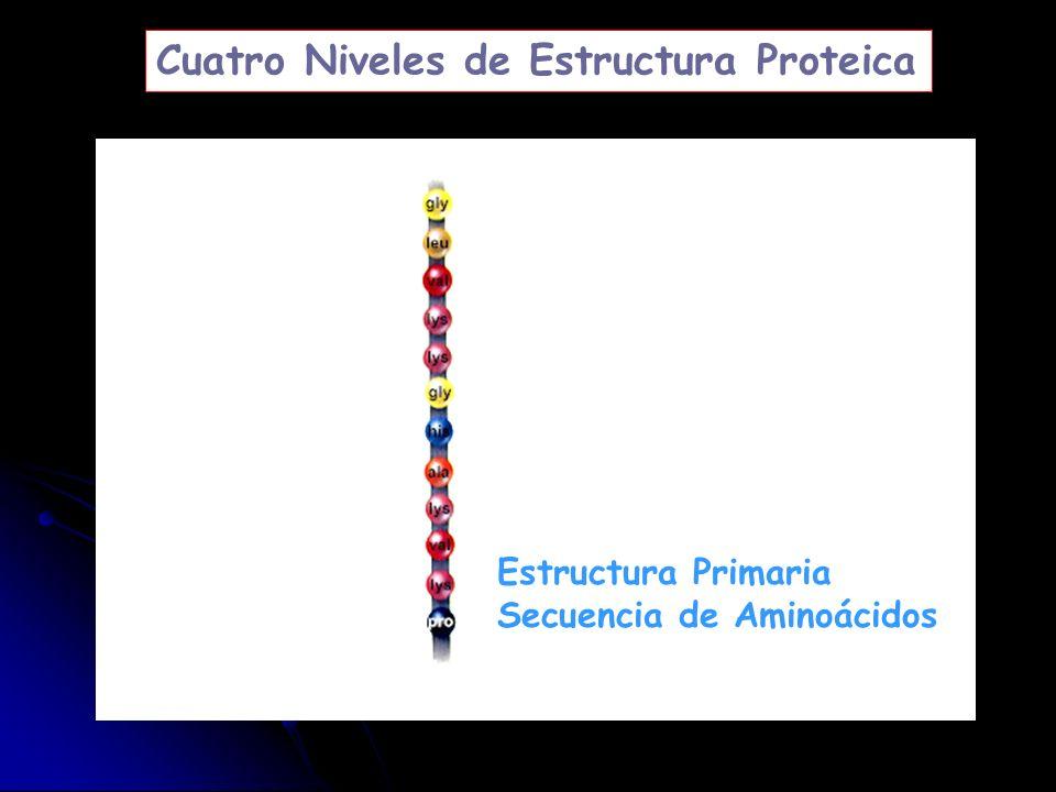 Estructura Primaria Secuencia de Aminoácidos Cuatro Niveles de Estructura Proteica