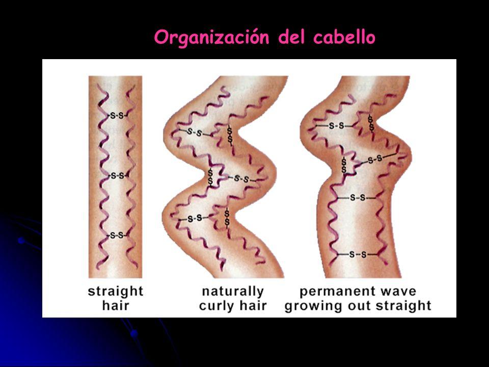 Organización del cabello