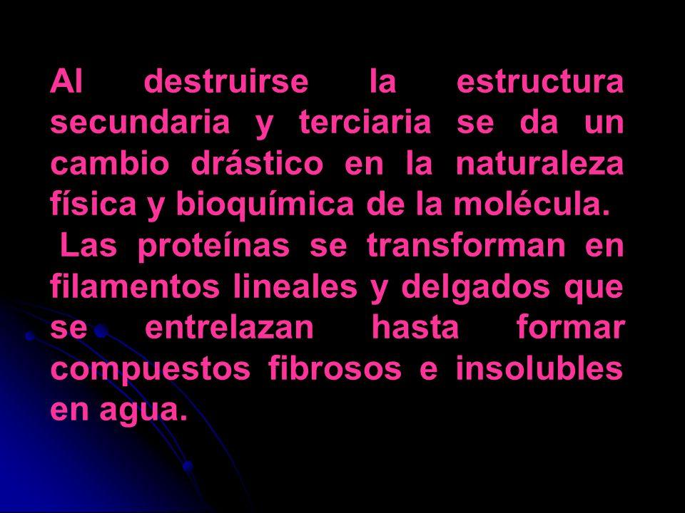 Al destruirse la estructura secundaria y terciaria se da un cambio drástico en la naturaleza física y bioquímica de la molécula. Las proteínas se tran