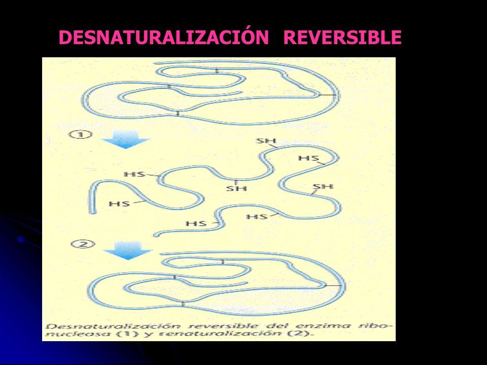 DESNATURALIZACIÓN REVERSIBLE