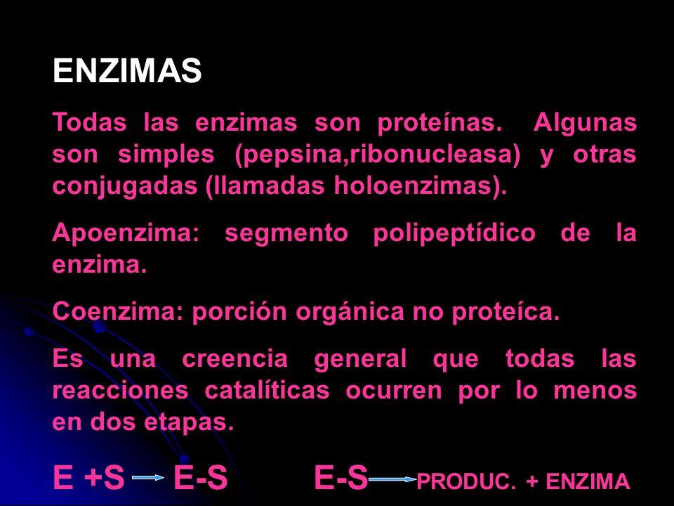 ENZIMAS Todas las enzimas son proteínas. Algunas son simples (pepsina,ribonucleasa) y otras conjugadas (llamadas holoenzimas). Apoenzima: segmento pol