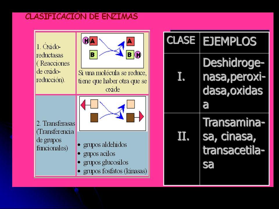 CLASEEJEMPLOS I. I. Deshidroge- nasa,peroxi- dasa,oxidas a II. II. Transamina- sa, cinasa, transacetila- sa