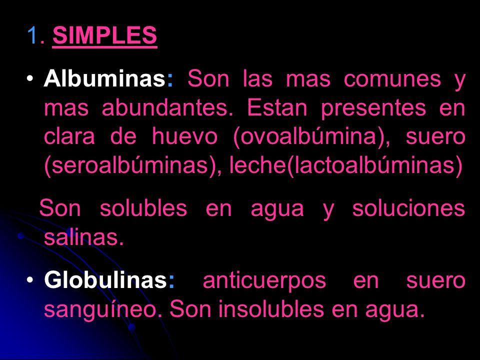 1. SIMPLES Albuminas: Son las mas comunes y mas abundantes. Estan presentes en clara de huevo (ovoalbúmina), suero (seroalbúminas), leche(lactoalbúmin