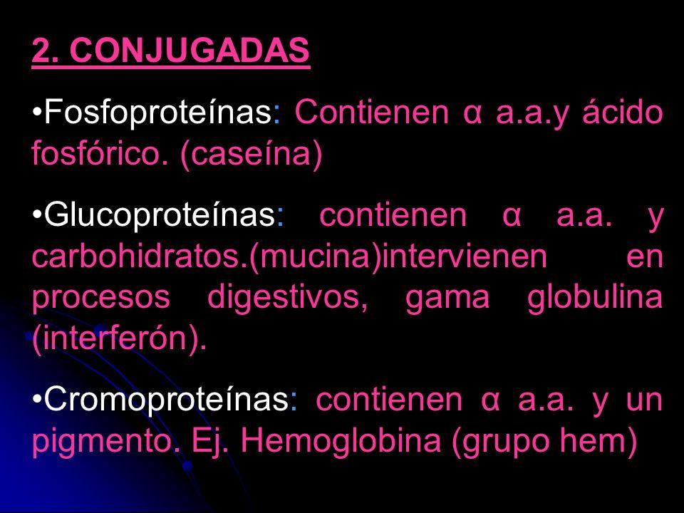 2. CONJUGADAS Fosfoproteínas: Contienen α a.a.y ácido fosfórico. (caseína) Glucoproteínas: contienen α a.a. y carbohidratos.(mucina)intervienen en pro