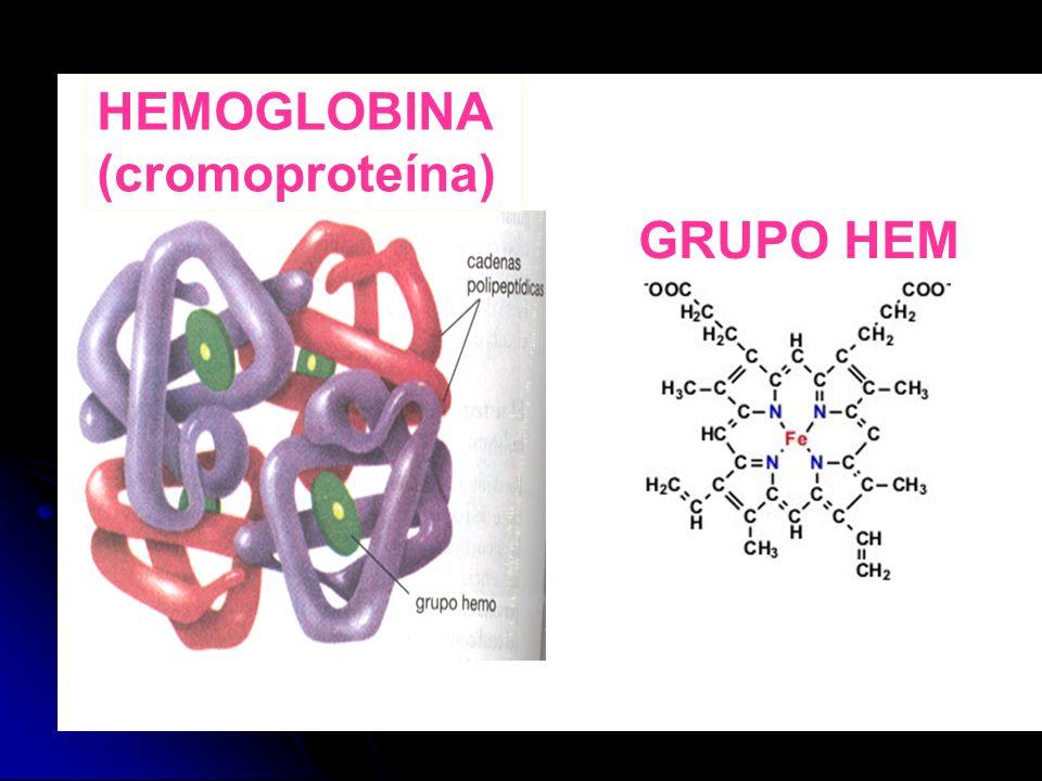 HEMOGLOBINA (cromoproteína) GRUPO HEM